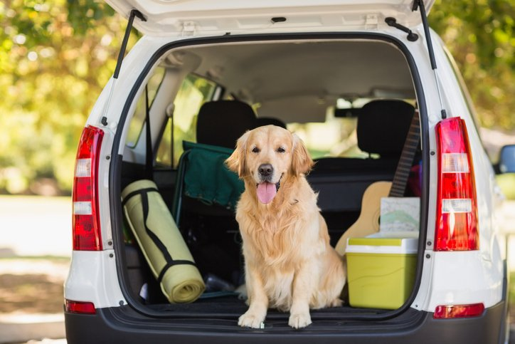 7 Creative Ways To Remove Pet Hair From Your Car S Interior