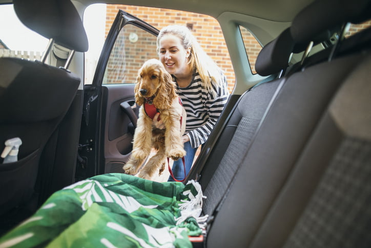 Pet car allergies – woman carrying dog into car