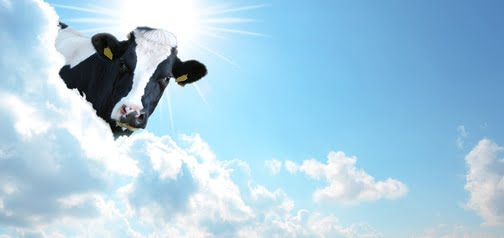 It seems like it can be true that cows fly at the end